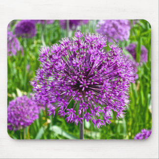Allium roxo, Mousepad