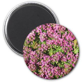 Allyssum cor-de-rosa floresce o ímã ímã redondo 5.08cm