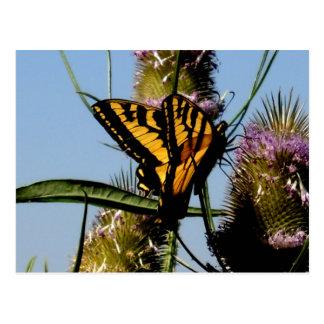 Almoço da borboleta cartão postal