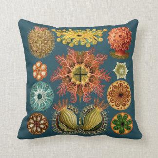 Almofada Cerceta do travesseiro do equinodermo de Haeckel