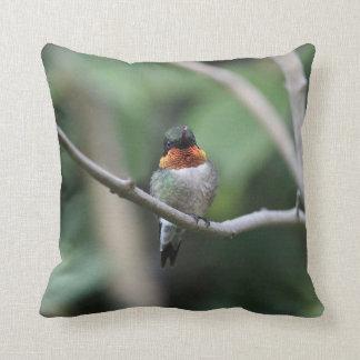 Almofada colibri Rubi-throated