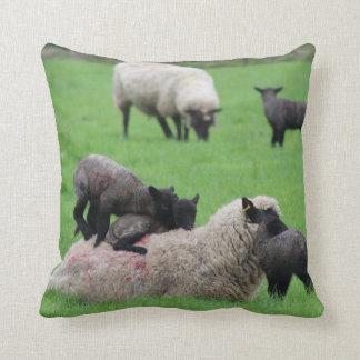Almofada Cordeiro e carneiros do primavera