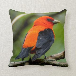 Almofada Escarlate do travesseiro decorativo do Tanager