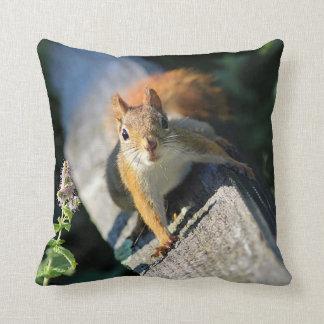 Almofada Esquilo vermelho
