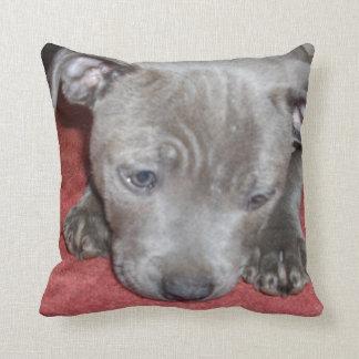 Almofada Filhote de cachorro azul de Staffordshire bull
