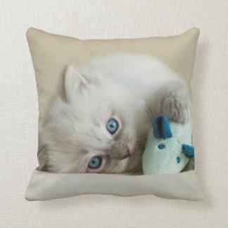 Almofada gatinho semanas de idade de 6 Ragdoll