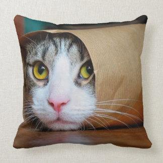 Almofada Gato de papel - gatos engraçados - meme do gato -