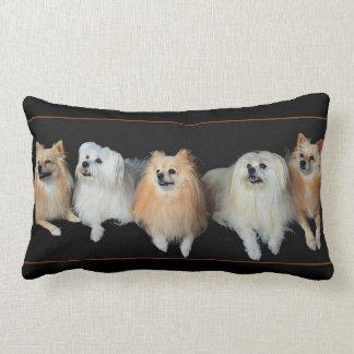 Almofada Lombar Cães de Pomeranian no travesseiro decorativo