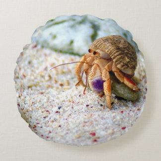 Almofada Redonda Caranguejo da areia, Curaçau, ilhas das Caraíbas,