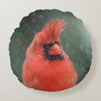 Almofada Redonda Cardeal em um pinheiro durante uma tempestade da