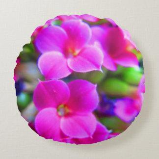 Almofada Redonda Kalanchoe feliz brilhante floresce o roxo magenta