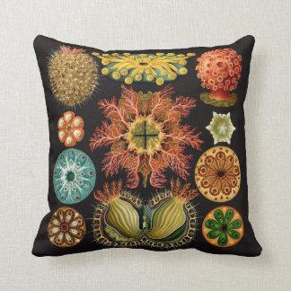 Almofada Travesseiro do equinodermo de Haeckel