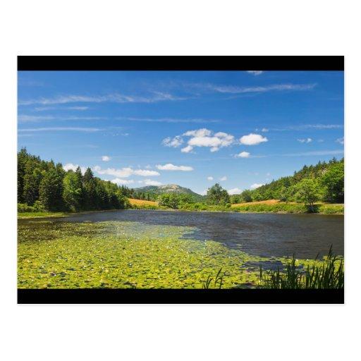 Almofadas de lírio no parque nacional do Acadia Cartao Postal