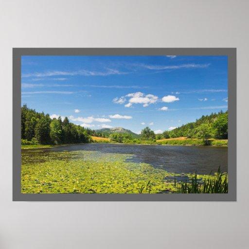 Almofadas de lírio no parque nacional do Acadia Impressão
