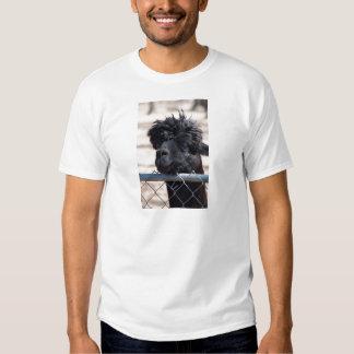 Alpaca adulta preta - pacos do Vicugna Tshirts