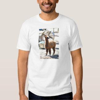 Alpaca do bebê - pacos do Vicugna Camisetas