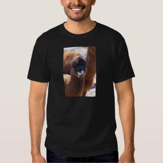 Alpaca doce do bebê - pacos do Vicugna Camisetas