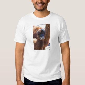 Alpaca doce do bebê - pacos do Vicugna Tshirt