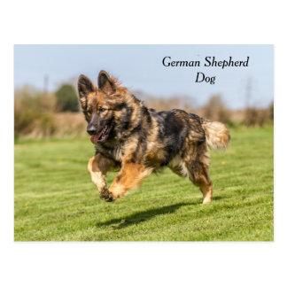 Alsatian do cão de german shepherd do cartão