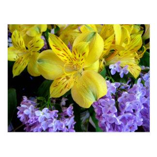 Alstroemeria e cartão das flores dos Lilacs