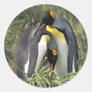 Amantes dos pinguins de rei adesivos redondos