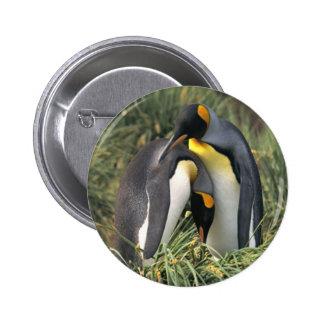 Amantes dos pinguins de rei botons