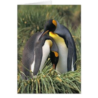 Amantes dos pinguins de rei cartões