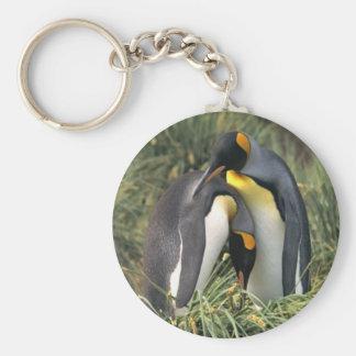 Amantes dos pinguins de rei chaveiro