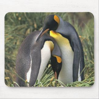 Amantes dos pinguins de rei mousepads
