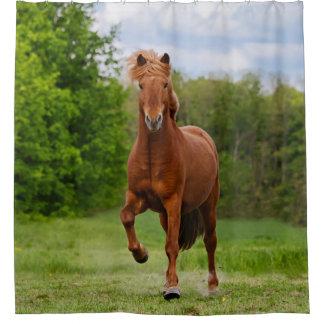 Amantes engraçados do cavalo da foto de Tölt do Cortina Para Box