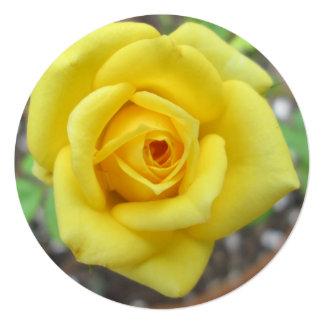 Amarelo da flor do jardim de rosas mini convite quadrado 13.35 x 13.35cm