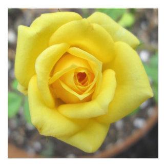 Amarelo da flor do jardim de rosas mini convites personalizados