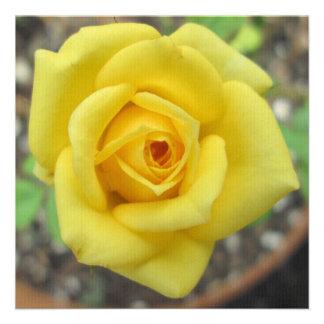 Amarelo da flor do jardim de rosas mini convite personalizados