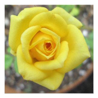 Amarelo da flor do jardim de rosas mini convite personalizado