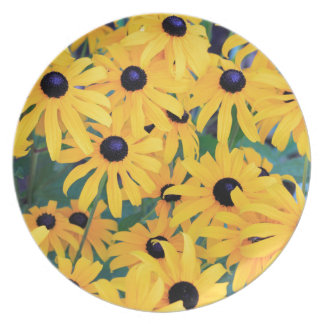 Amarelo das flores de Susan de olhos pretos dentro Prato