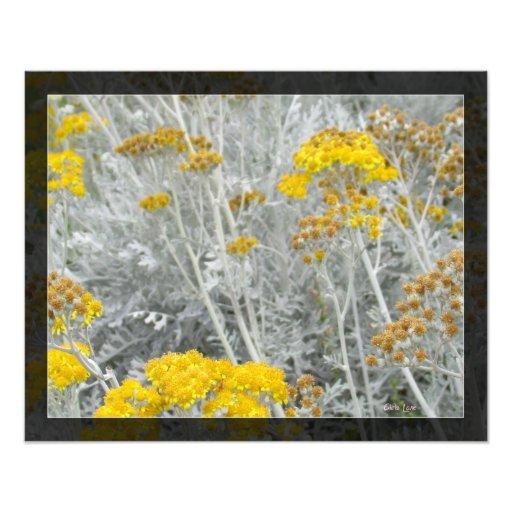 Amarelo e flores do ouro no impressão branco impressão de foto