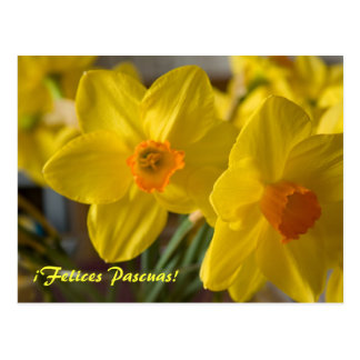 ¡ Amarelo Felices Pascuas dos daffodils!  cartão Cartão Postal
