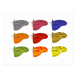 Amazon coloriu o cartão da borboleta