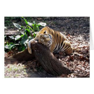 Ame-me como uma rocha - cartão do tigre de Bengal