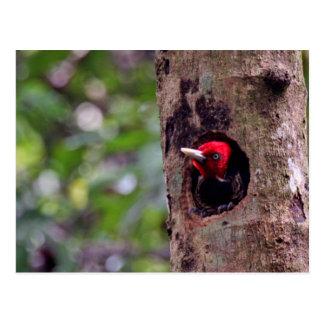América Central, Costa Rica, Manuel Antonio Cartão Postal