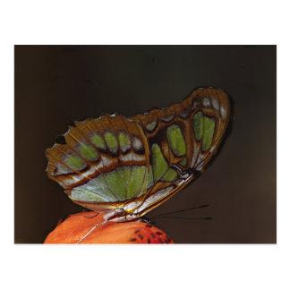 América Central, Costa Rica, Selva Verde. 2 Cartão Postal