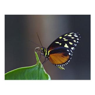 América Central, Costa Rica, Selva Verde. 3 Cartão Postal