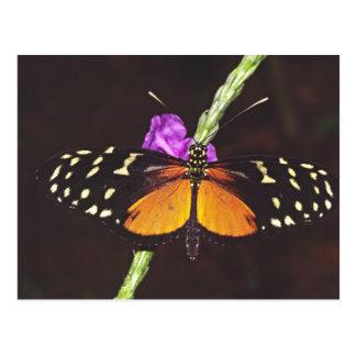 América Central, Costa Rica, Selva Verde. Cartão Postal