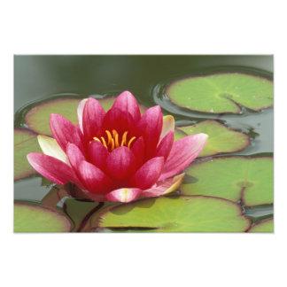 America do Norte, EUA, WA, Seattle, parque da flor Impressão De Foto