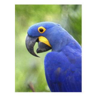 Ámérica do Sul, Brasil, Pantanal. Psto em perigo Cartão Postal