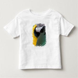 Ámérica do Sul, Brasil, parque de Iguacu Natioanl, Camiseta