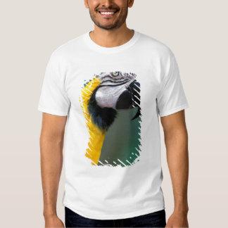 Ámérica do Sul, Brasil, parque de Iguacu Natioanl, Camisetas