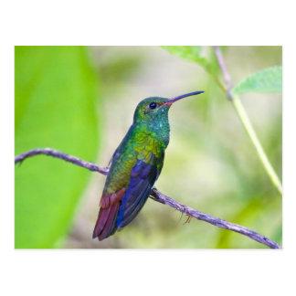 Ámérica do Sul, Costa Rica, Sarapiqui, Selva do La Cartão Postal