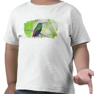 Ámérica do Sul, Costa Rica, Sarapiqui, Selva do La T-shirts