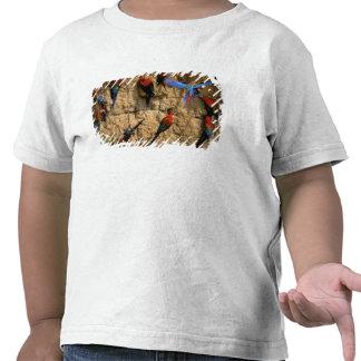 Ámérica do Sul, Peru, parque nacional de Manu, T-shirt